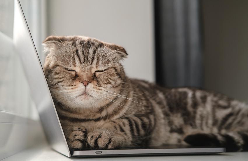 اشتباه رایج هنگام خرید لپ تاپ - لپتاپ سبک